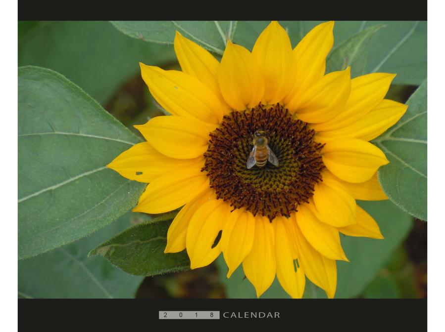 橫式月曆製作,便宜優質的桌曆、月曆印刷服務-捷可印